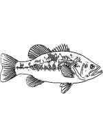Perch-coloring-pages-5