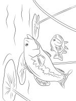 Perch-coloring-pages-7