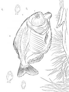 Piranhas-coloring pages-4