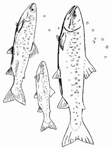 Salmon-coloring pages-6