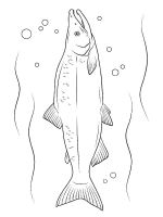 Salmon-coloring pages-9