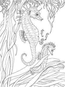 Seahorse-coloring pages-2