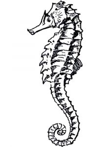 Seahorse-coloring pages-8
