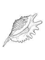 Seashell-coloring-pages-1