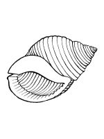 Seashell-coloring-pages-10