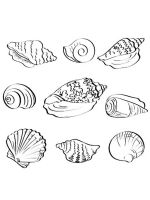 Seashell-coloring-pages-12