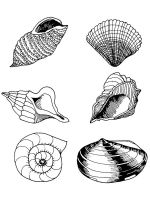 Seashell-coloring-pages-15
