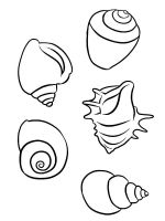 Seashell-coloring-pages-18