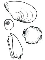 Seashell-coloring-pages-22