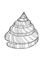 Seashell-coloring-pages-8