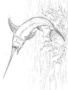 Swordfish-coloring pages-8