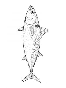 Tuna-coloring pages-10