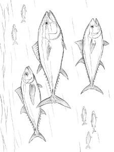 Tuna-coloring pages-2