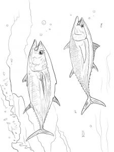 Tuna-coloring pages-8