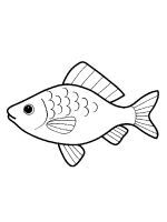 crucian-coloring-pages-7