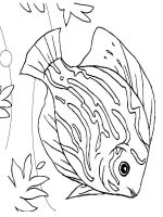 sea-fish-coloring-pages-5