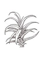 Aloe-coloring-pages-16