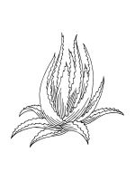 Aloe-coloring-pages-18