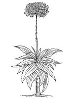 Aloe-coloring-pages-5