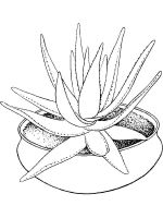 Aloe-coloring-pages-6