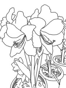Amaryllis-coloring-pages-1