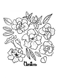 Azalea-coloring-pages-1