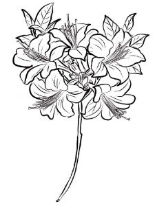 Azalea-coloring-pages-2
