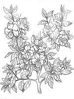 Azalea-coloring-pages-4