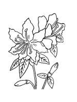 Azalea-coloring-pages-6