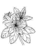 Azalea-coloring-pages-7