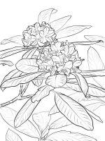 Azalea-coloring-pages-8