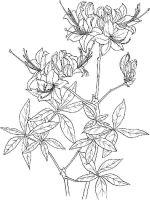 Azalea-coloring-pages-9