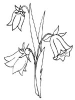 Bellflower-coloring-pages-11
