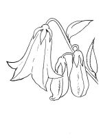 Bellflower-coloring-pages-12