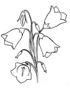 Bellflower-coloring-pages-14