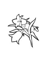 Bellflower-coloring-pages-16