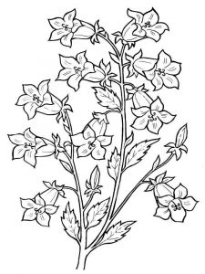 Bellflower-coloring-pages-3