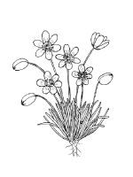 Buttercup-coloring-pages-13