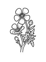 Buttercup-coloring-pages-14