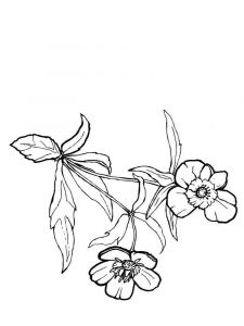 Buttercup-coloring-pages-2