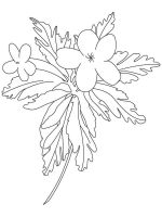 Buttercup-coloring-pages-6