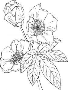 Buttercup-coloring-pages-7