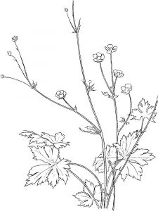 Buttercup-coloring-pages-8