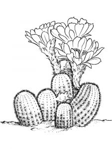 Cactus-flower-coloring-pages-13