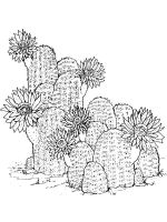 Cactus-flower-coloring-pages-15