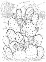 Cactus-flower-coloring-pages-2