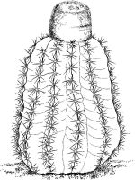 Cactus-flower-coloring-pages-5
