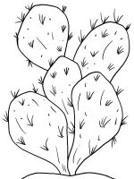 Cactus-flower-coloring-pages-6