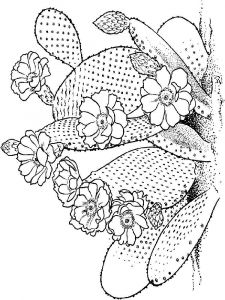 Cactus-flower-coloring-pages-8