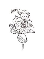 Camellia-coloring-pages-14